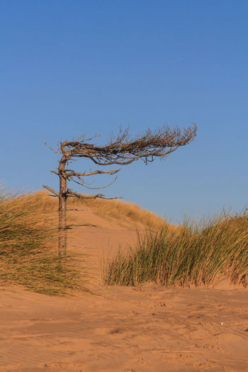 Scenic view of sand dune against clear sky