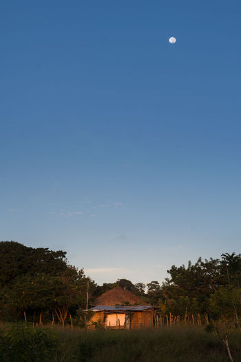 early sunlight