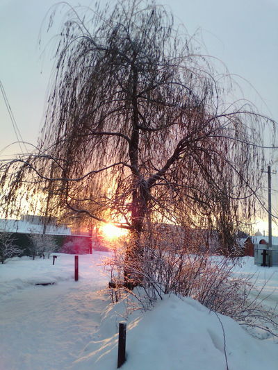 #sky #Cool #Winter #tree #branches #sun Cold Temperature Winter Sunset Water Tree Bare Tree Weather Ski Lift