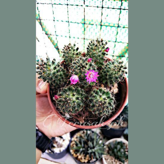 Cactus Cactus Flower I Love Cactus Cactusclub Cactus Garden