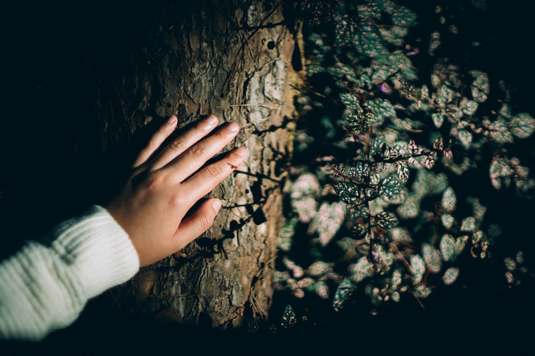 Midsection of person touching tree against plants