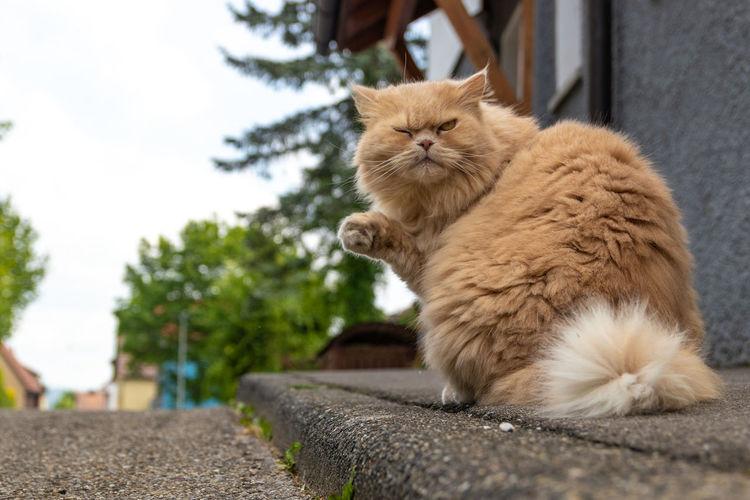 Cool Cat Animal