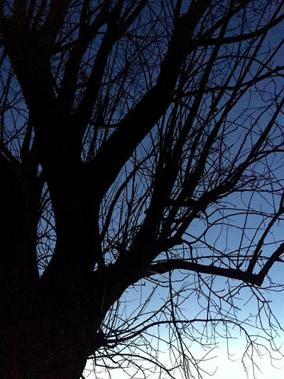 Winter black tree Bare Tree Beauty In Nature Branch Day Evening Sky Low Angle View Nature No People Outdoors Silhouette Sky Tree Winter Winter Trees