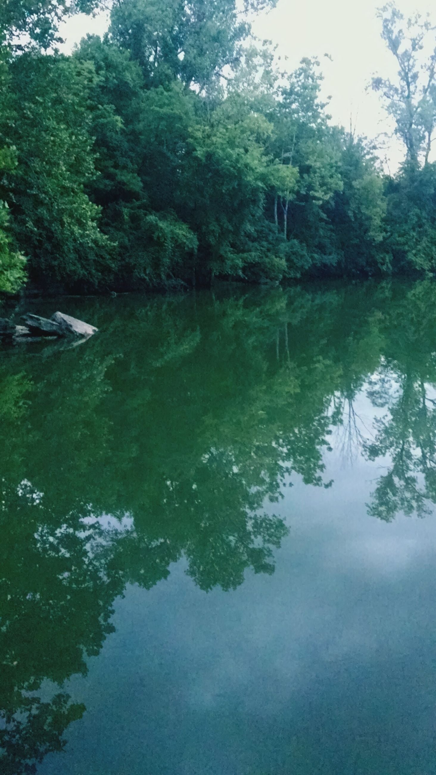 water, tree, reflection, tranquility, lake, tranquil scene, beauty in nature, scenics, waterfront, nature, growth, river, forest, green color, idyllic, standing water, day, calm, outdoors, sky