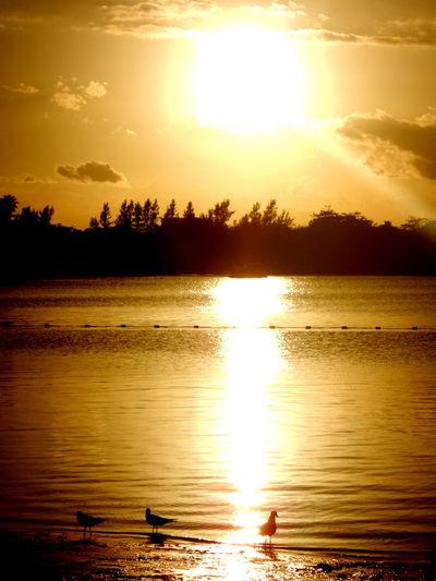 Cloud - Sky Lake Nature Reflection Scenics - Nature Sky Sunset Water