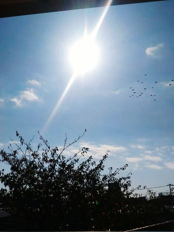 Morning Sky Sunlight Sky Low Angle View Sun Day Sunisup ☀ Japan Photography Wake Up My Year My View Thisday Feeling Myself  Blessed  Good Things Come In Small Packages With Lightcase EyeEmNewHere EyeEm Best Shots My View