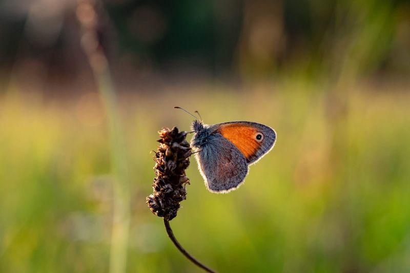 Warming. EyeEmNewHere Nature Photography Nature Animals In The Wild Wildlife Perching Full Length Butterfly - Insect Insect Flower Animal Themes Close-up Animal Wing Animal Antenna Symbiotic Relationship Butterfly