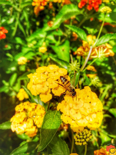 Flower Perching Flower Full Length Yellow Leaf Butterfly - Insect Insect Close-up Animal Themes Plant