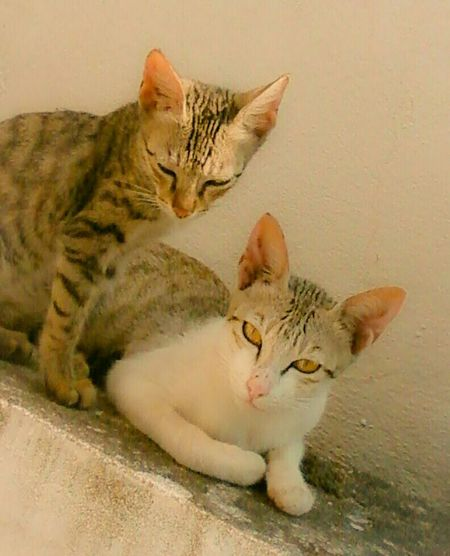 Kittens Cats Cats Lovers  Cat♡ Catsagram Caturday Cute Pets