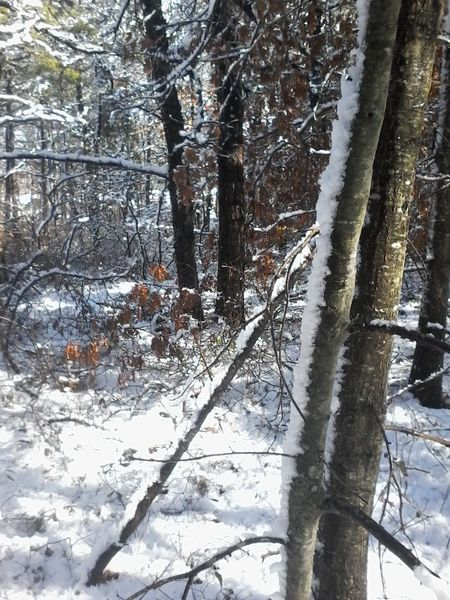 Relaxing Taking Photos Check This Out Snow Cheese! Wintwer Trees Enjoying Life Nature Woods Cheese!!!