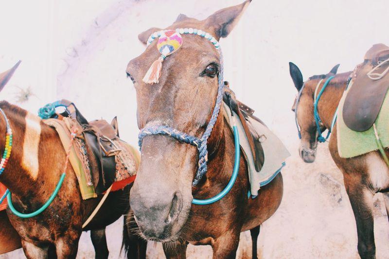 Donkeys on field