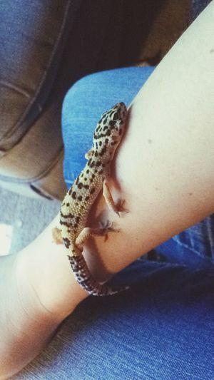 The love of my life. Lizard Love Leopard Gecko Love 🐲💖