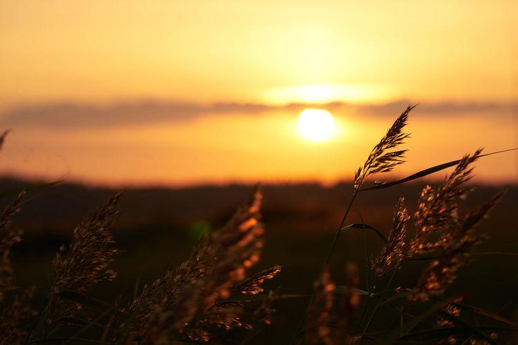 Cloud Grass