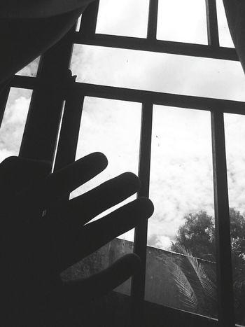 Window Close-up ❣
