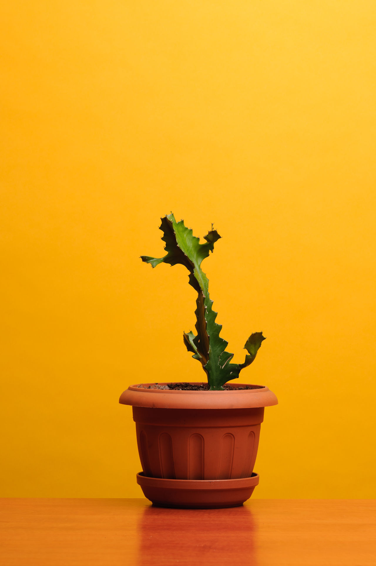 CLOSE-UP OF POTTED PLANT ON TABLE BY SEA