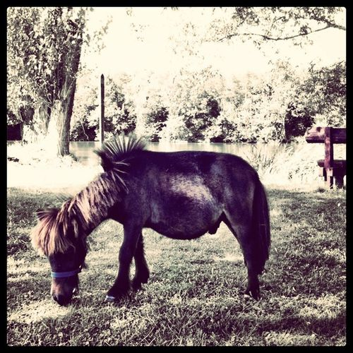 Little #Hungarian #pony   #summer #jj_forum #jj #dunaj #hungary #brannan #csarda Summer Hungary Pony Jj  Jj_forum Brannan Hungarian Alaniskosummer2011_hungary Csarda Dunaj