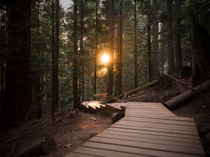 Sunsets Sunlight Footpath Tranquil Scene Sunset No People Tree Trunk Trunk Scenics - Nature Wood - Material The Way Forward Non-urban Scene WoodLand Growth