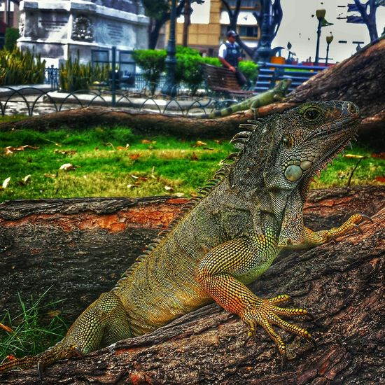 AllYouNeedIsEcuador Reptiles Green Parqueseminario