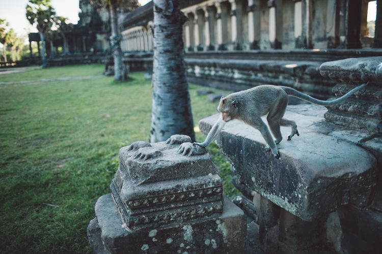 Siem Reap Cambodia Angkor Temple Angkor Wat Animal Themes Animal Animal Wildlife Animals In The Wild Day One Animal Vertebrate Architecture Nature Built Structure Mammal Focus On Foreground No People Plant Outdoors Rodent Water Religion Architectural Column