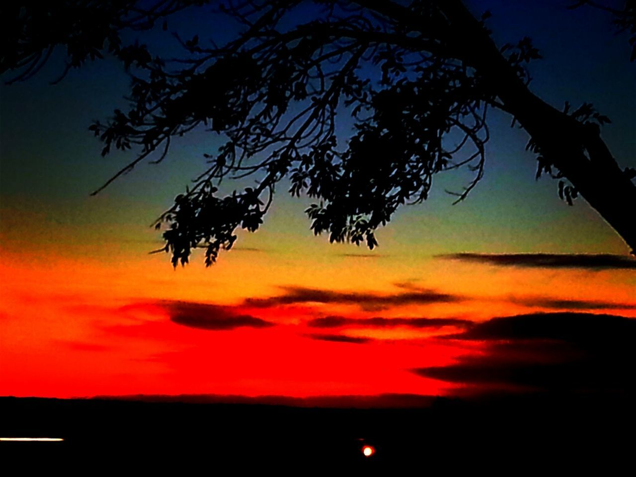 sunset, orange color, beauty in nature, silhouette, sky, nature, scenics, tree, tranquil scene, dramatic sky, cloud - sky, tranquility, no people, outdoors, idyllic, low angle view, branch