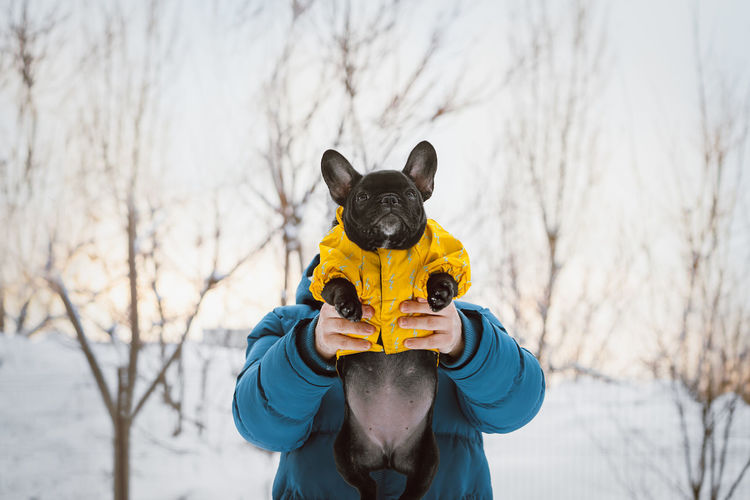 Togetherness Frenchie Pet Frenchbulldog One Person One Animal Warm Clothing Pets Snow Cold Temperature Winter Portrait Bare Tree Disguise Pet Clothing Dog French Bulldog Bulldog Puppy Canine Mask - Disguise #NotYourCliche Love Letter