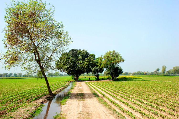 Amazing view Countryside Province of Punjab Iftikhar Iftikhar Photography Iftikhar Images Countryside Lahore Punjab Pakistan Tree Plant Landscape Agriculture Field Land Sky Rural Scene Environment Scenics - Nature Tranquility Nature Beauty In Nature Growth Tranquil Scene Day Farm Green Color No People Clear Sky Outdoors Diminishing Perspective Treelined