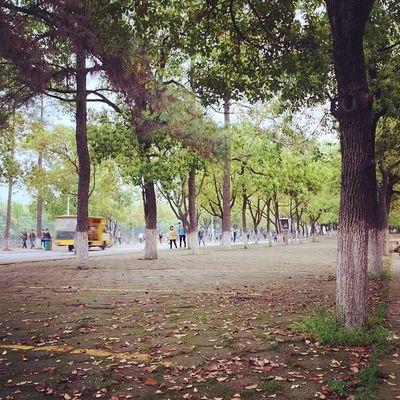 落叶纷飞。