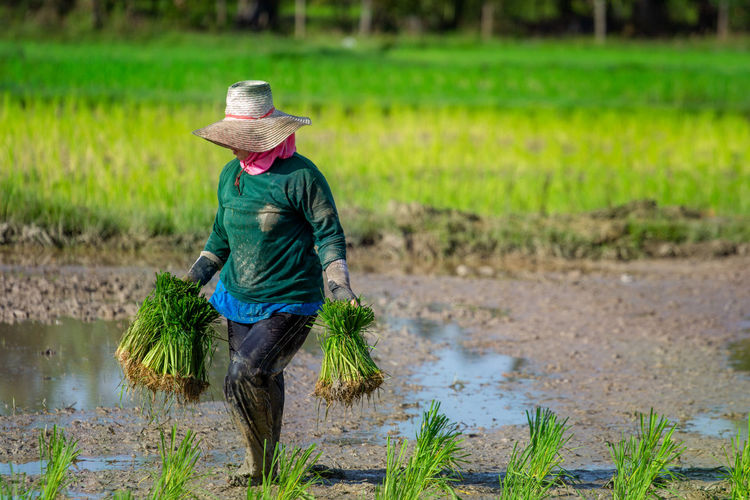 Female Farmer Working At Rice Paddy