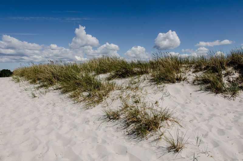 Baltic Sea Beach Beauty In Nature Cloud - Sky Field Grass Green Color Growing Growth Idyllic Landscape Mountain Nature No People Non Urban Scene Outdoors Plant Remote Scenics Sky Sweden Tranquil Scene Tranquility White White Sand