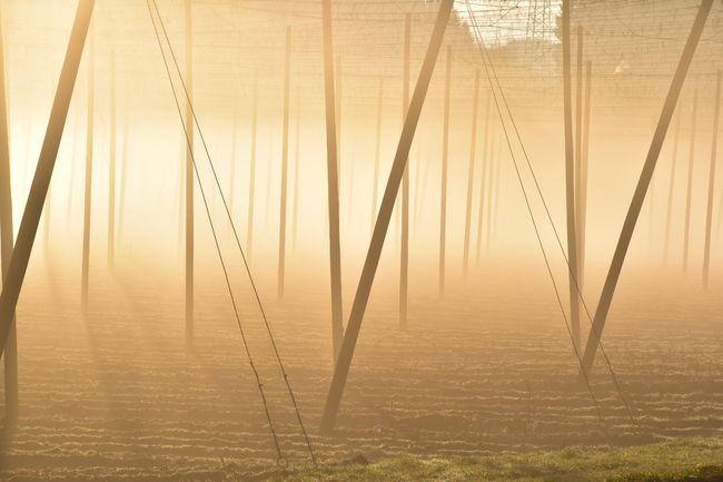 Guten Morgen Nebel Hopfen Sonne Ruhe Und Stille Herrlich Silence Day Spazieren Und Fotografieren Genießen Summer ☀ Outdoors