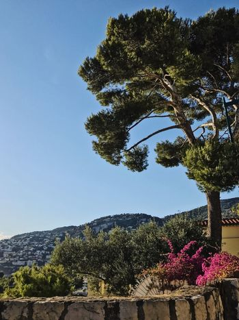 Tree Clear Sky Beauty In Nature Nature Sky Scenics Outdoors Tranquility French Riviera Mediterranean  Côte D'Azur Pine Tree Landscape_photography Village