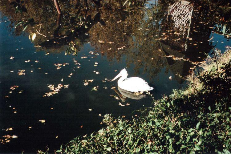 35mm Animal Themes Beauty In Nature Bird Film Lake Mju Mju2 Nature Olympus Outdoors Reflection Scenics Swimming Water Water Bird Wildlife Zoology