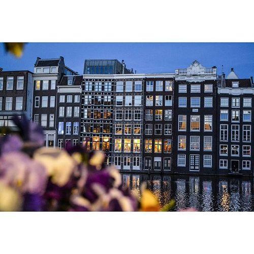 Amsterdam. Amsterdamworld Bestofamsterdam Flowers Night Iamamsterdam @1x5 1x5 Featuremeofh Photosfever