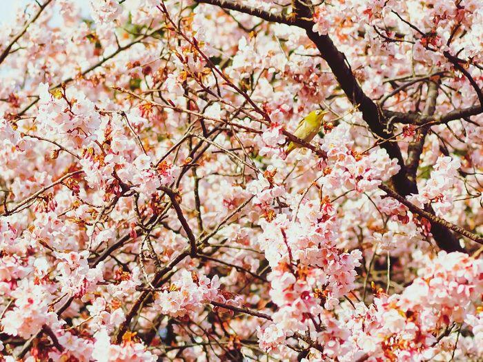 Full Frame Shot Of Pink Flowering Tree