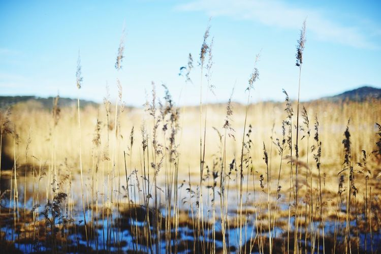 Check This Out Hello World Taking Photos Enjoying Life Lakeside Lakeshore Nature Photography Nature Sunny Sunny Day Grass Snapshots Of Life Switzerland Pfäffikersee The Great Outdoors With Adobe