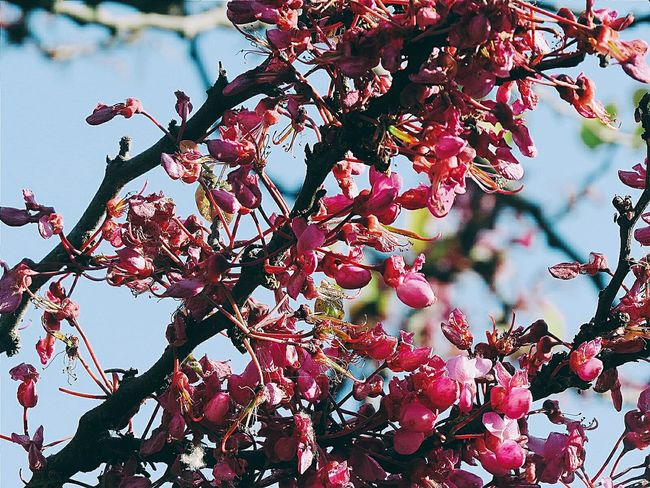 Tree Beauty In Nature Nature Growth Branch Freshness Pink Flowers Spring Outdoors Nature Photography Nature_collection Flowers_collection Backgrounds Canonphotopgraphy The Week On Eyem EyeEm Gallery EyeEm Best Shots EyeEmBestPics Eye4photography