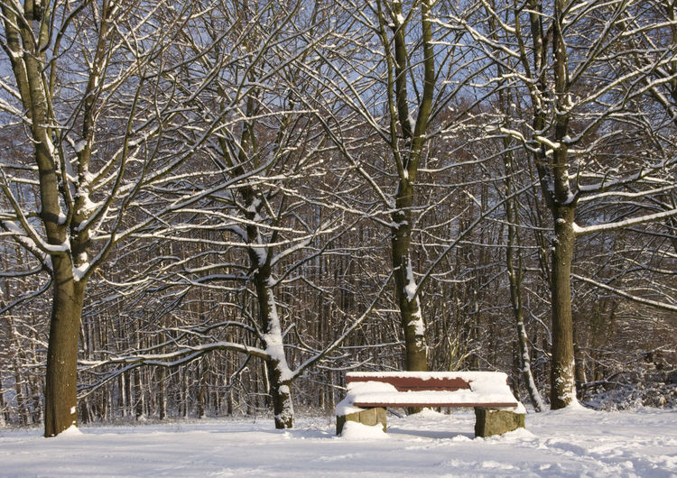 Bare Tree Beauty In Nature Branch Cold Temperature Day Frozen Nature No People Outdoors Scenics Sky Snow Snowing Tranquility Tree Weather Winter