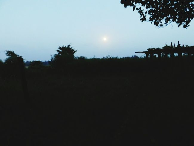 Night Nightphotography Nightshot Full Moon Night  No People Nature_collection Landscape Bokeh Lights Original Artwork Nightscape Freshness Grass Green Colour Best Of EyeEm Night Photography Nature Photography Non-urban Scene Non Western Plants Forest