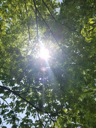 sun ray The