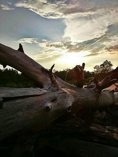 Natural Nature Landscape Portklang Sunset