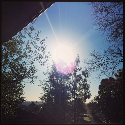Beautiful sunshine yesterday ☀️🍃☀️ Sunshine ☀ Sun Beautifulday Trees Simplylovely👌🏻