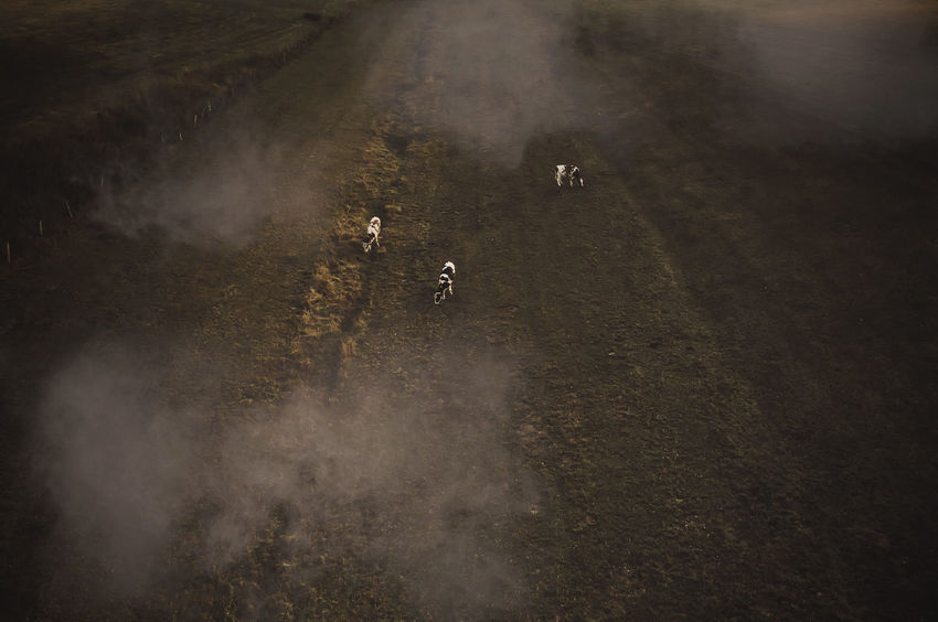 - THE FIELD - DJIxEyeEm Check This Out Field Dronephotography Drone Photography Drone  Field Clouds High Angle View Transportation Mammal Day Land Domestic Animals Real People Nature Animal Wildlife Domestic Dust Dirt Motion