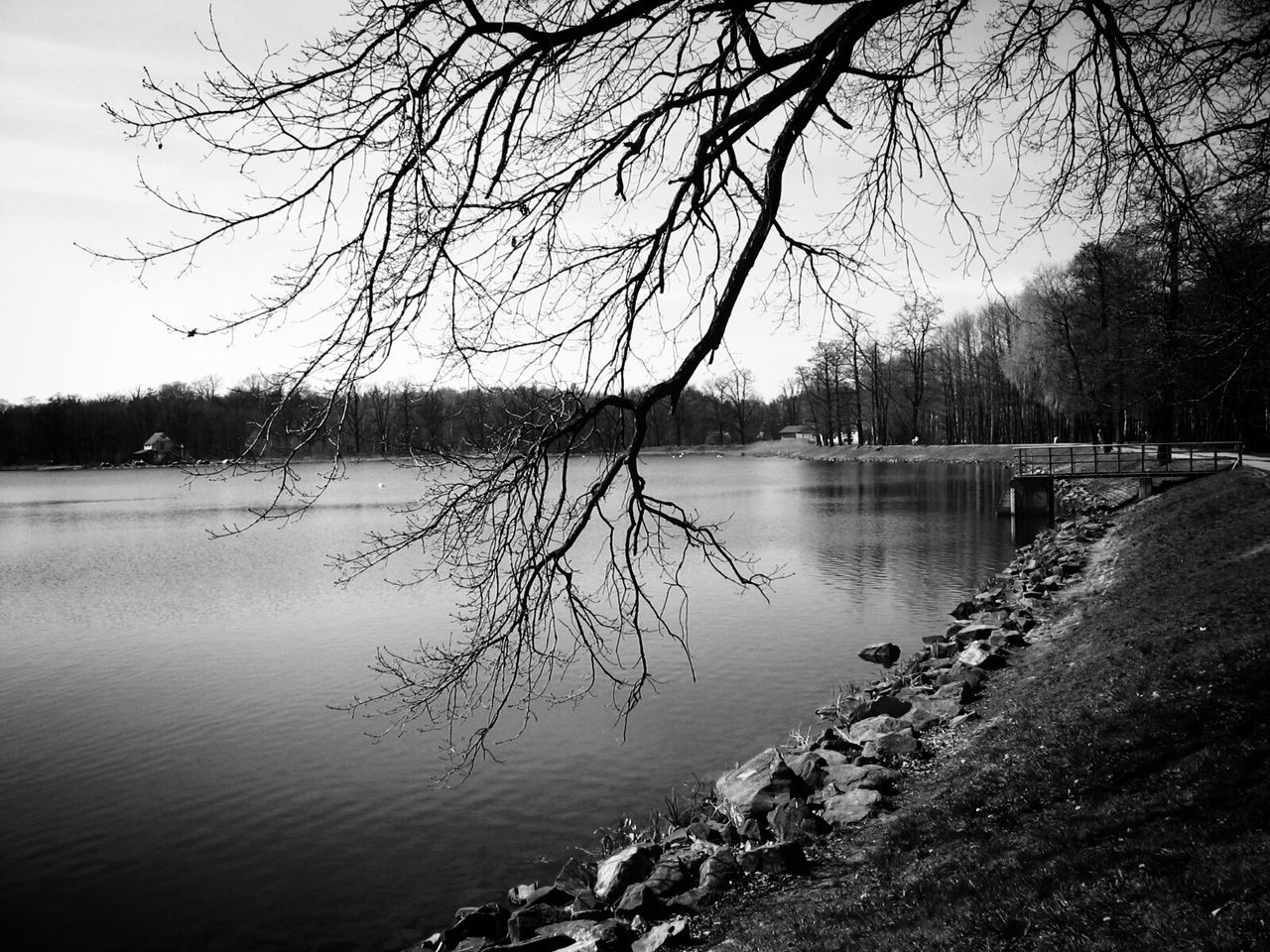 water, tree, lake, nature, bare tree, beauty in nature, tranquility, tranquil scene, scenics, non-urban scene, no people, reflection, sky, outdoors, waterfront, branch, landscape, winter, day