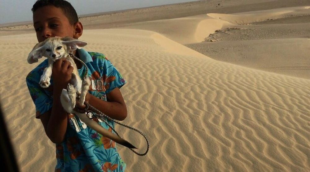 Child with the fox of the desert Sahara Desert Tunisia Fox Child Sand Sand Dune One Person Real People Outdoors Nature Arid Climate Travel Love Animals
