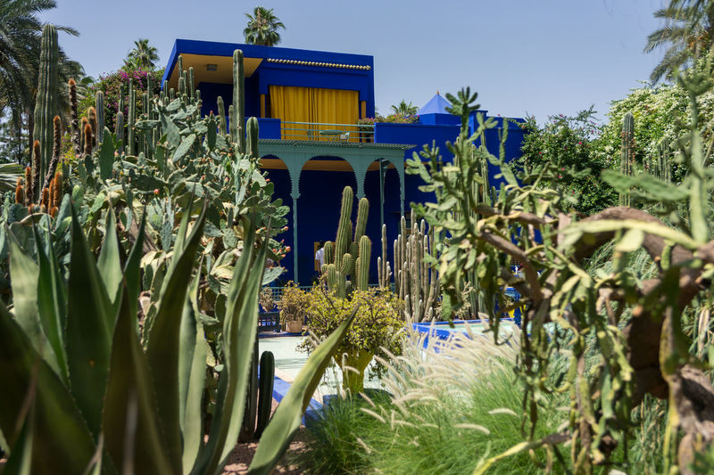 2017 Green Majorelle Marrakesh Morocco Phototrip Travel Africa Architecture Blue Building Exterior Built Structure Day Garden Jardin Majorelle_blue Majorellegarden Nature No People Outdoors Peter_lendvai Plant Sky Sony_a99