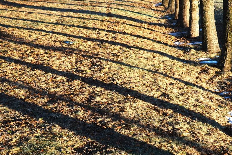 Pattern Pieces Patterns Stripes Tress Grass Wintertime