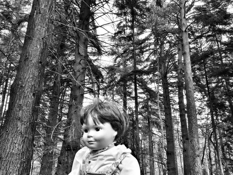 Toy in the forest. Toy Boy Doll Forest Trees Nature New Forest Uk South Monochrome Monochromatic Scene Still Rhinefield