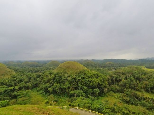 Agriculture Hill Valley Nature Landscape Tree Tea Crop Rural Scene Beauty In Nature Forest Social Issues Field Outdoors Green Color Cloud - Sky Fog Scenics No People Mountain Peak Day Chocolatehills Bohol Philippines
