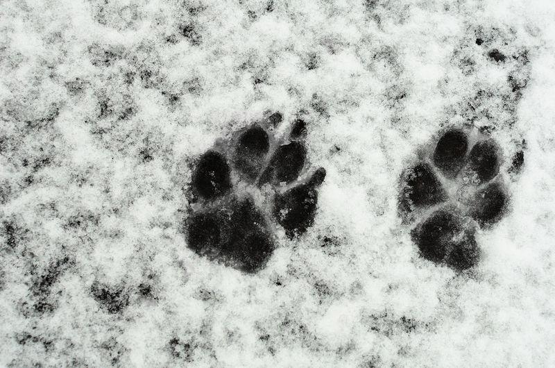 Animal Footprints Animal Footprints Cold Temperature Dog Dog Footprint Dog Love Dog's Footprints Dogs FootPrint FootPrint Footprints Footprints In Snow Footprints In The Snow No People Snow White