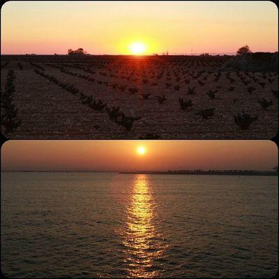 Ayer la puesta de Sol la vivía en el Mar Medierraneo . Hoy en el Mar de Vinãs de CastillaLaMancha , Sunset Tomelloso Socuellamos WINEUP Campo